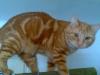 12.4.2010 Leon
